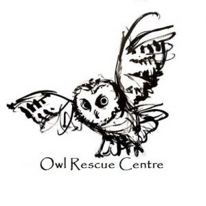 Owl Rescue Center | Precise
